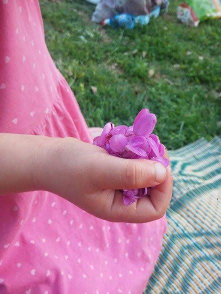 פרחי כליל החורש