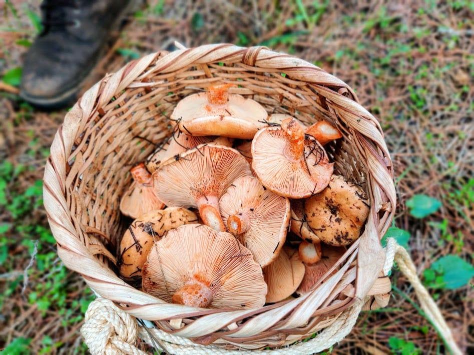 מאפה פטריות חוביזה וסומאק