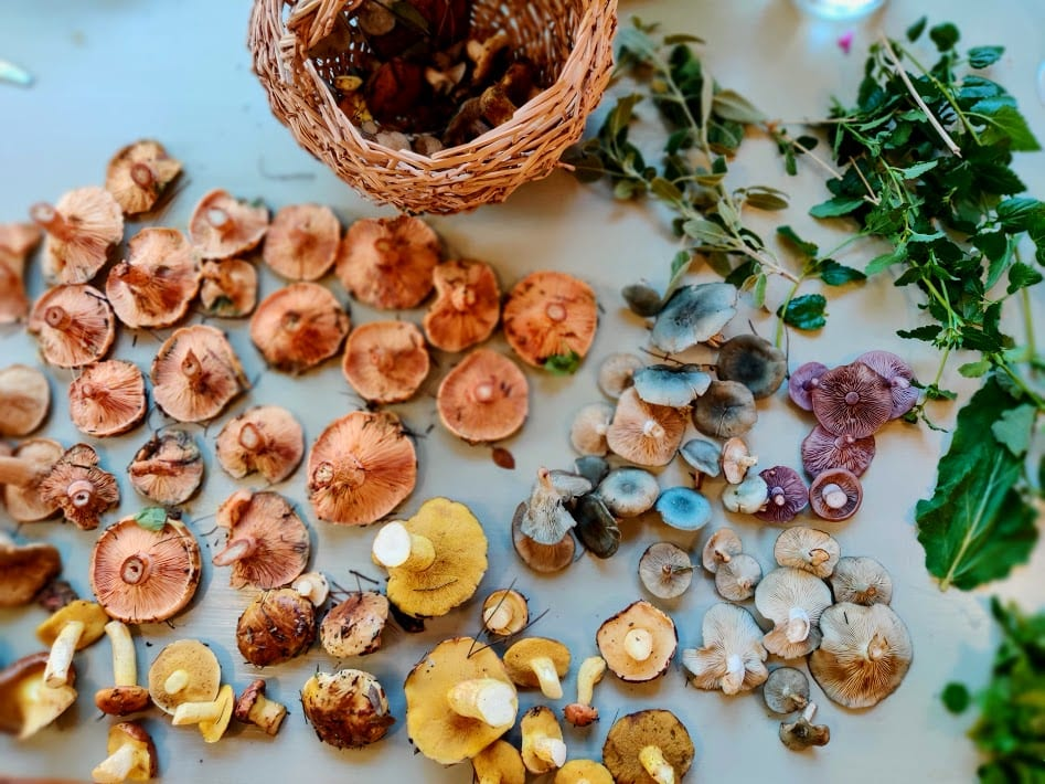 פטריות מלוקטות מהיער