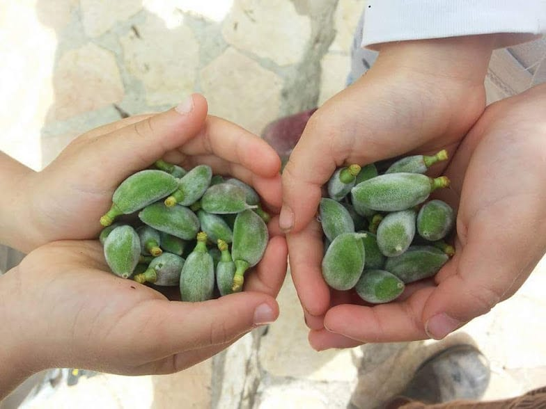 סלט פאקוס ושקדים ירוקים
